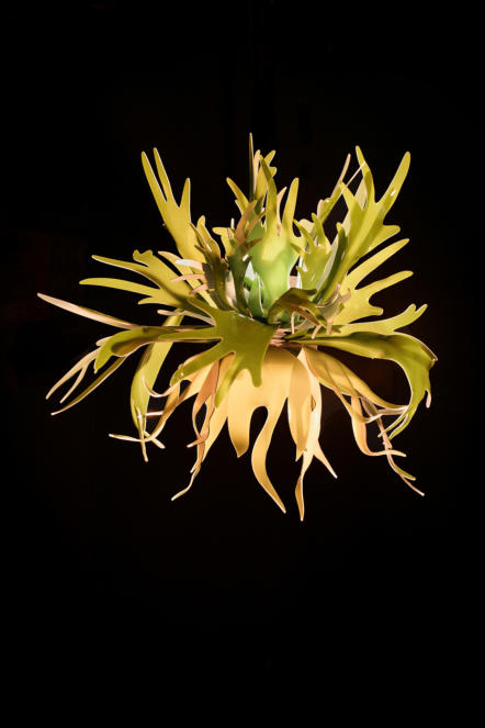Staghorn Fern Sconce